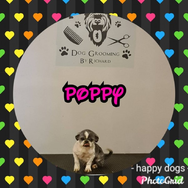 Photo by Happy Dogs And Pets in Happy dogs and pets. May be an image of dog and text that says 'DoG GROOMING BY RICHARD POPPY -happy dogs PhotoGrid'.