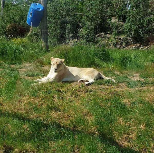 Photo by Ondrej M. on June 05, 2021. May be an image of big cat and outdoors.