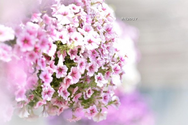 Photo by N2017 on July 30, 2021. May be a closeup of flower, nature and text.