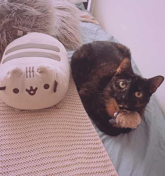 Photo by Fluffiness & Black Panther⬛ in New York, New York with @pusheen, and @pusheenbox. May be an image of cat and indoor.