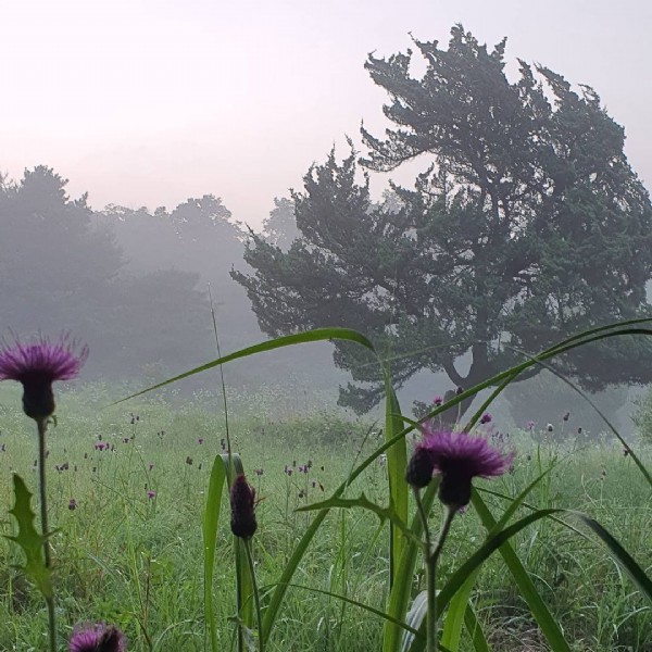 Photo by park hyunshin on June 19, 2021. May be an image of teasel and nature.