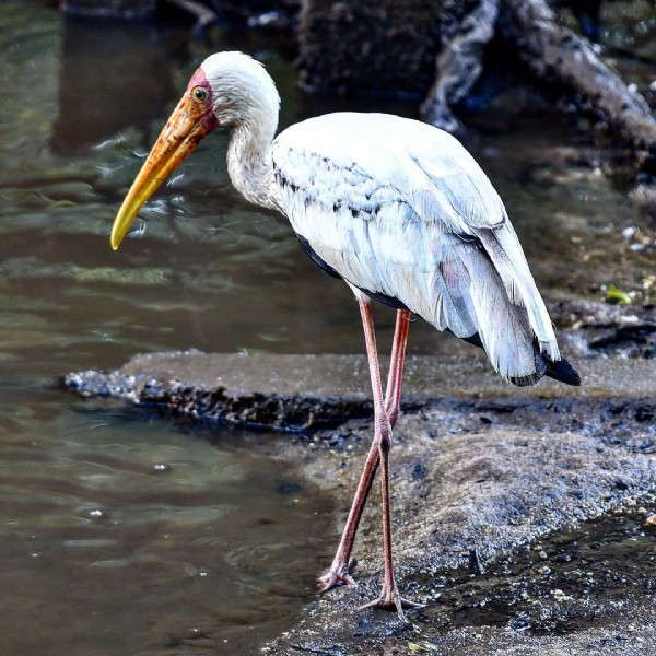 Photo by Leisure Photographer on September 22, 2021. May be an image of wading bird and nature.