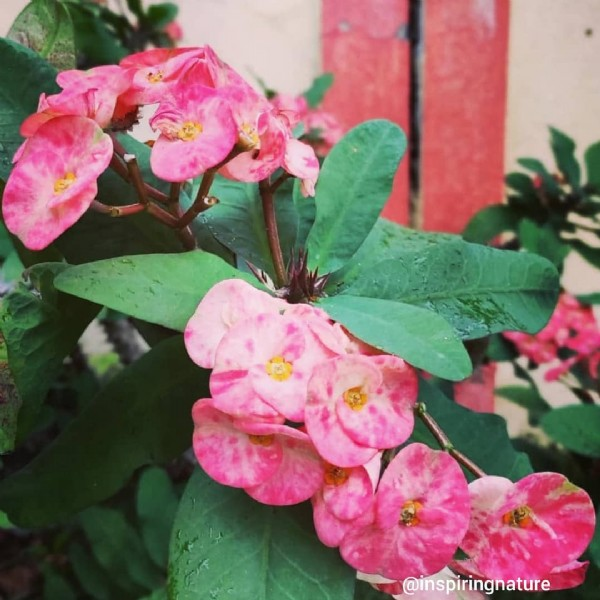 Photo by Sip and see the world in Pune, Maharashtra. May be an image of flower and nature.