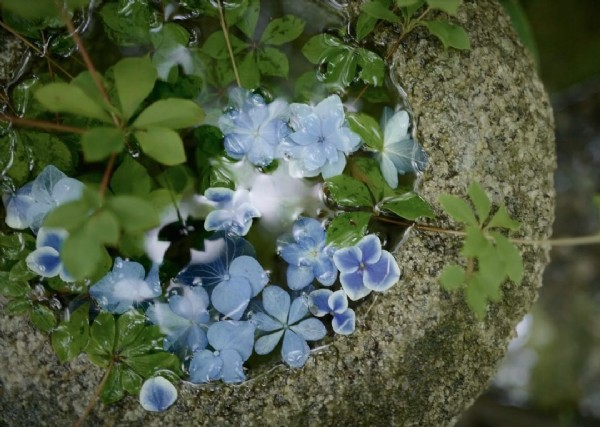 Photo by @happyokon2 on August 02, 2021. May be an image of flower and nature.