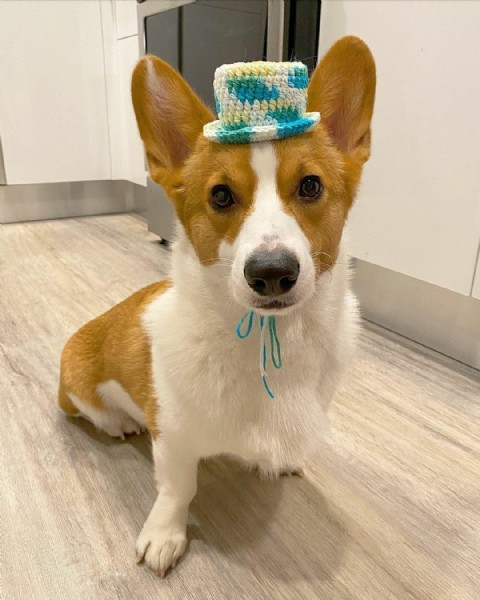 Photo shared by Just the dog vibe on September 21, 2021 tagging @milo.le.corgi. May be an image of 1 person and dog.