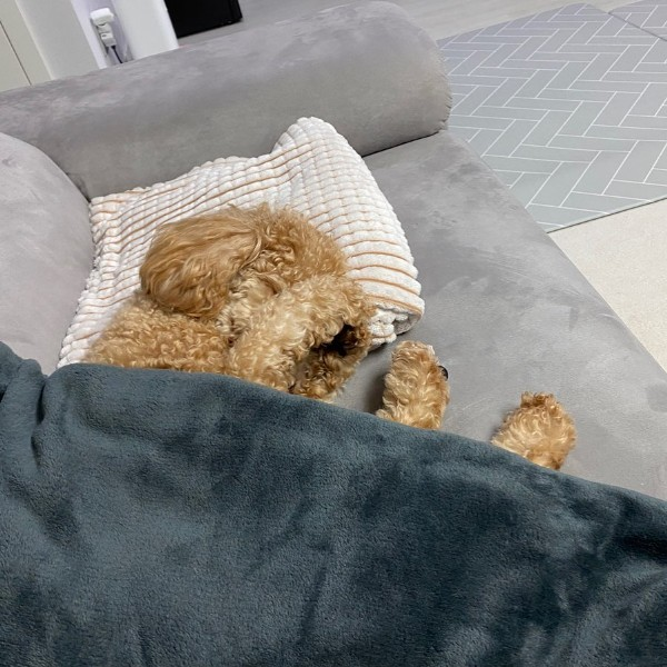 Photo by 말랭이 on July 29, 2021. May be an image of dog and indoor.