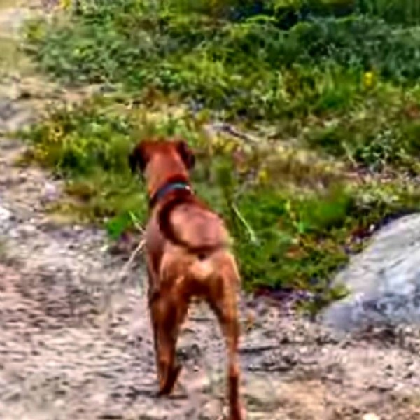 Photo by Harish Rawat on June 10, 2021. May be an image of dog and outdoors.