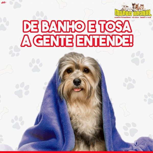 Photo by Clínica Vet. Mundo Animal on June 23, 2021. May be an image of dog and text.