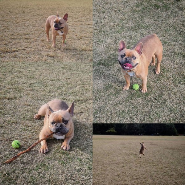 Photo by Jax on August 01, 2021. May be an image of dog, ball and grass.