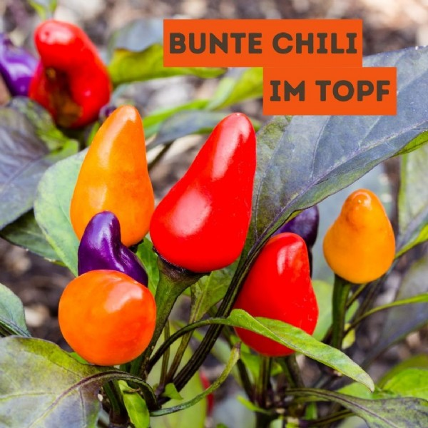 Photo by Ökokiste Hof Engelhardt on September 13, 2021. May be an image of food and text that says 'BUNTE CHILI IM TOPF'.