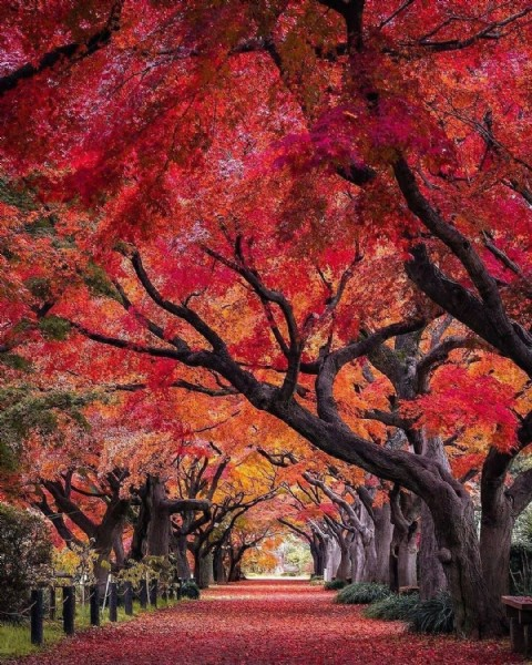 Photo by Japão Online in Japan with @j.carlosteles, and @topdestination1. May be an image of nature and tree.