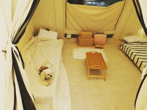 Photo by 콩이♡뽀리 in 강원도 영월군 무릉도원면. May be an image of campsite.