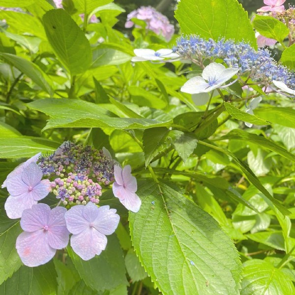 Photo by Indiba Salon MII(インディバサロンミィ) in 靱公園. May be an image of flower and nature.