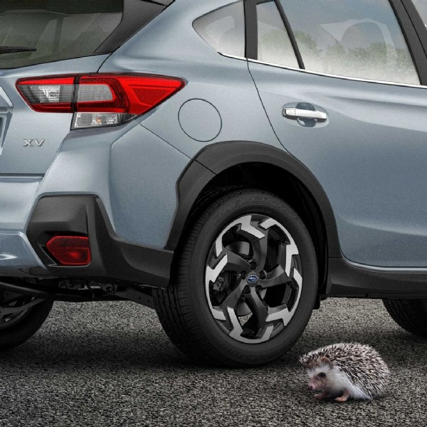 Photo by Subaru Russia on June 16, 2021. May be an image of hedgehog.
