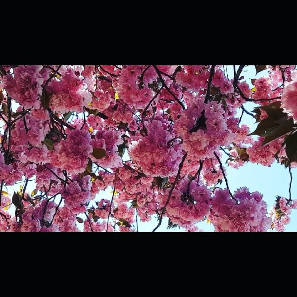 Photo by suman's vlog & lifestyle on July 31, 2021. May be an image of flower, nature and tree.