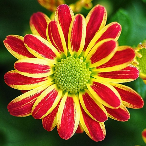 Photo by R. T. Michalak on September 20, 2021. May be a closeup of African daisy and nature.