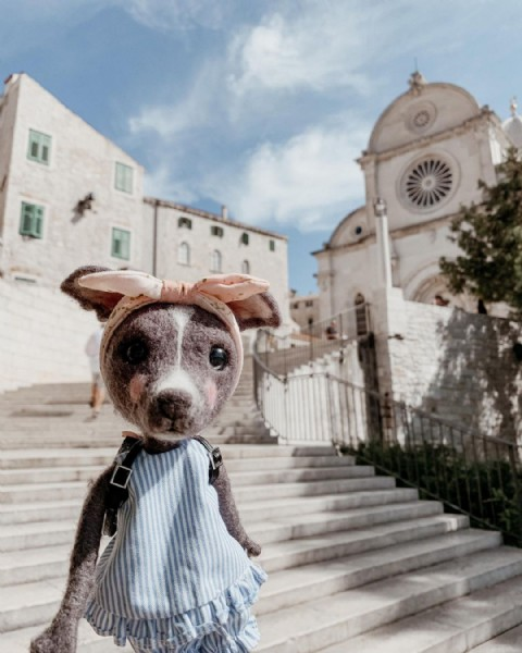 Photo shared by CHARON (チャロン) on September 22, 2021 tagging @meomundoll, @visitsibenik, and @sumi_whippet. May be an image of outdoors.