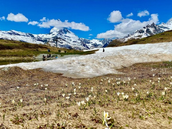 Photo by Be the Spring in your Life  in Zermatt Leisee. May be an image of nature.