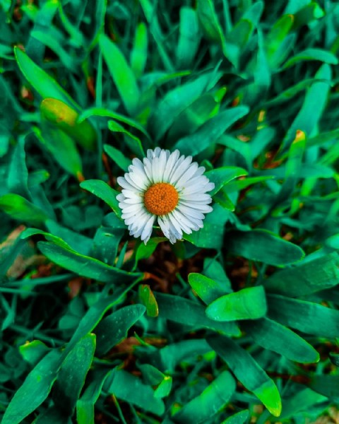 Photo by Hussein jrdo Hussein  in Wesel, Germany. May be a closeup of flower and nature.