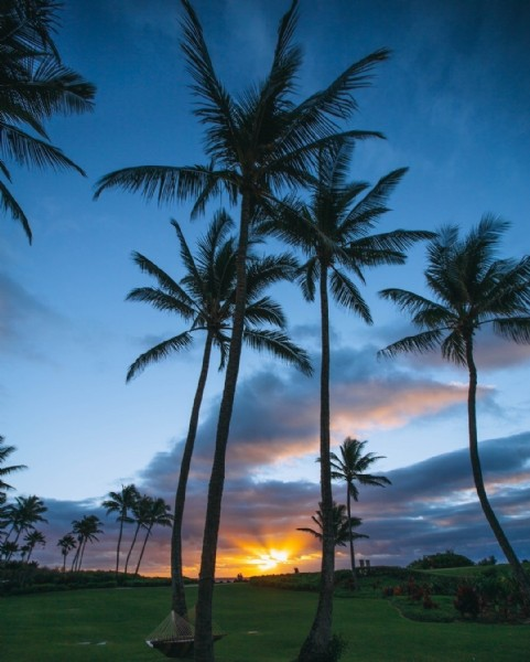Photo by Good Vibes Yoga on June 22, 2021. May be an image of twilight, palm trees, nature and sky.