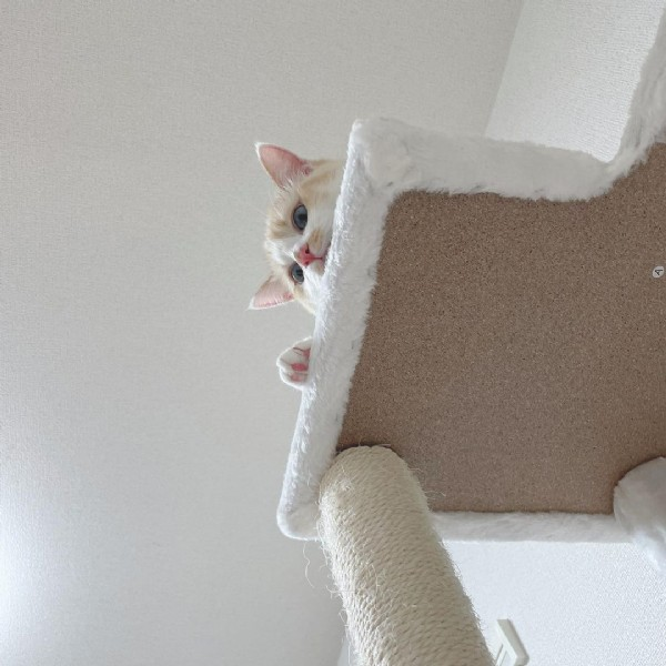 Photo by 白猫のライラ on June 11, 2021. May be an image of cat.