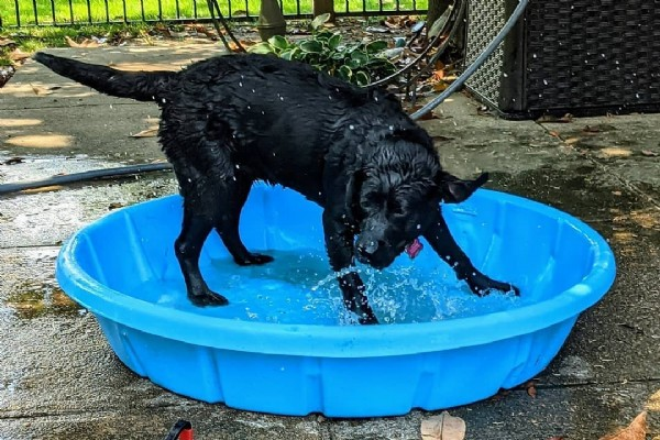 Photo by Duke Ellington on June 18, 2021. May be an image of dog and body of water.