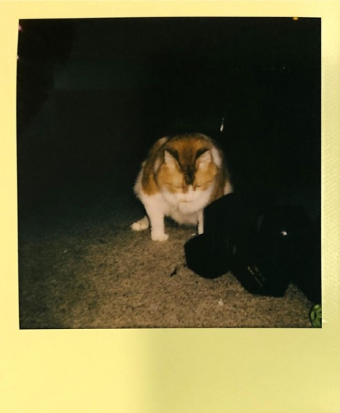 Photo by The Night Stalker on June 19, 2021. May be an image of cat.