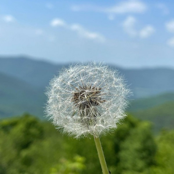 Photo by @indieuser in Berkshire, Massachusetts. May be an image of flower and nature.