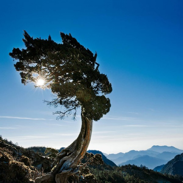 Photo by YuPing Chen in 南湖大山東峰. May be an image of tree, sky and nature.