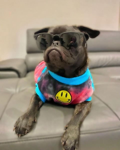 Photo by GILBERT the FRUG ❤️ in Melbourne, Victoria, Australia with @dogsofinstagram, @pugsofinstagram, @dogs, @dogsofmelbourne, @rayban, @fuzzyard, @barked, @dogs.lovers, @puppiesofinstagram, @frenchies.1, @frenchies, @cutest, @weratedogs, @pugs, @fuzzyarduk, @frenchieshome.official, @pawsup, and @officialdogsofvictoria. May be an image of dog.