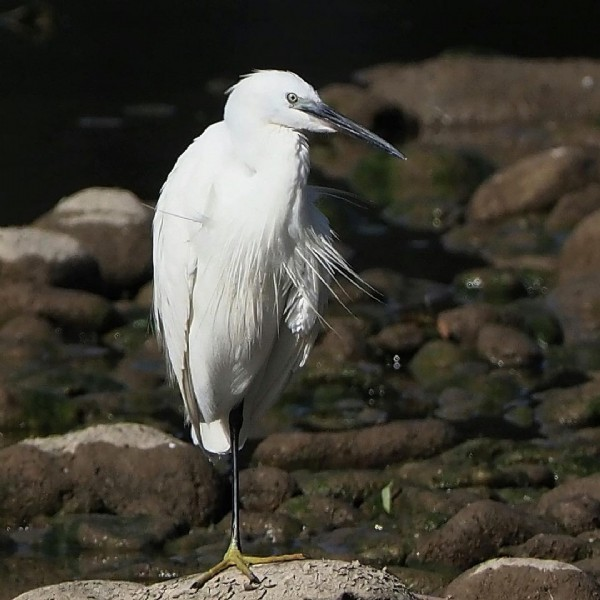 Photo by Albert Pedro Font in Manlleu - Osona. May be an image of wading bird and nature.