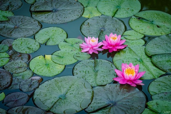 Photo by Max Diranko on August 02, 2021. May be an image of flower, body of water and nature.