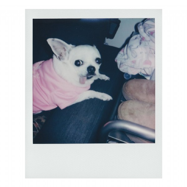Photo shared by Jenny on June 08, 2021 tagging @polaroid, and @mia.shan13. May be an image of dog.
