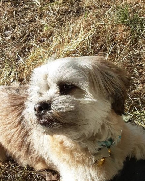 Photo by Koo B. on April 26, 2021. May be an image of dog and grass.