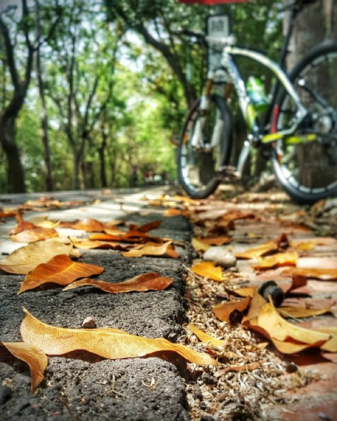 Photo by 劉醇賢 on April 11, 2021. May be an image of bicycle, nature and tree.