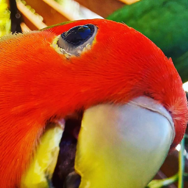 Photo by Penas e Bicos on June 05, 2021. May be an image of lovebird.