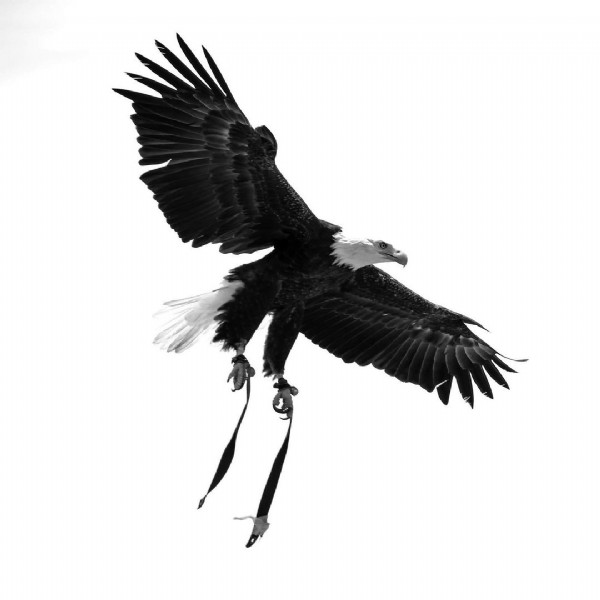 Photo by Foto & Grafia Estudio on August 02, 2021. May be an image of bird and nature.