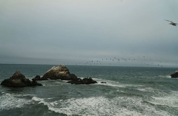 Photo by Lori in Lands End/Sutro Baths with @bay.shooters, and @bayarea_photographerz. May be an image of bird, ocean, coast and nature.