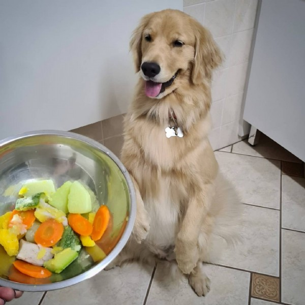 Photo by Estrella ⭐ Golden Retriever ⭐ in Indaiatuba, Brazil. May be an image of dog, food and indoor.