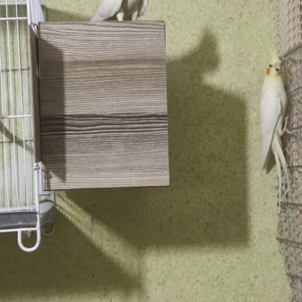 Photo by hamid mahmodian on June 19, 2021. May be an image of bird and indoor.
