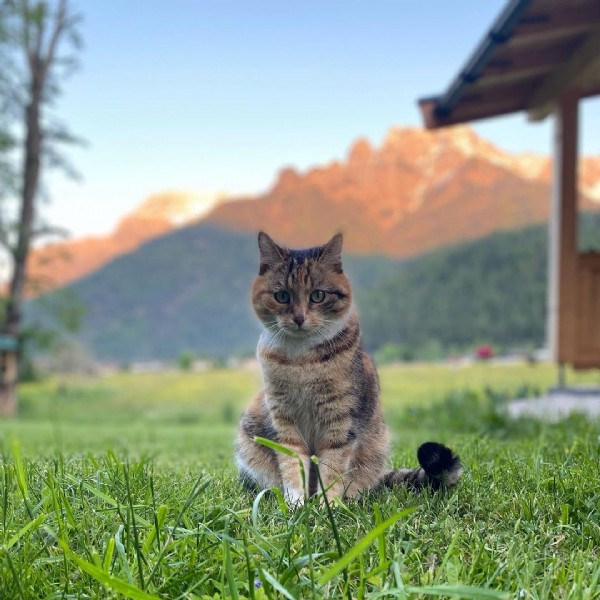 Photo by Beim Wagner Waidring in Waidring, Tirol, Austria. May be an image of nature.