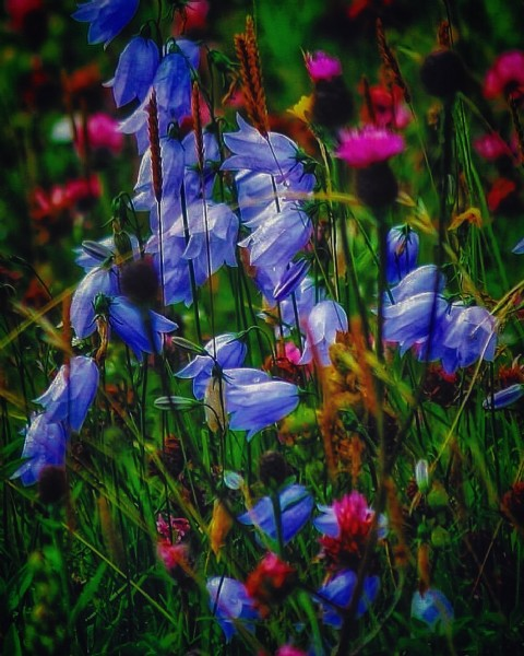 Photo by DaliMach in Outer Hebrides. May be an image of flower and nature.