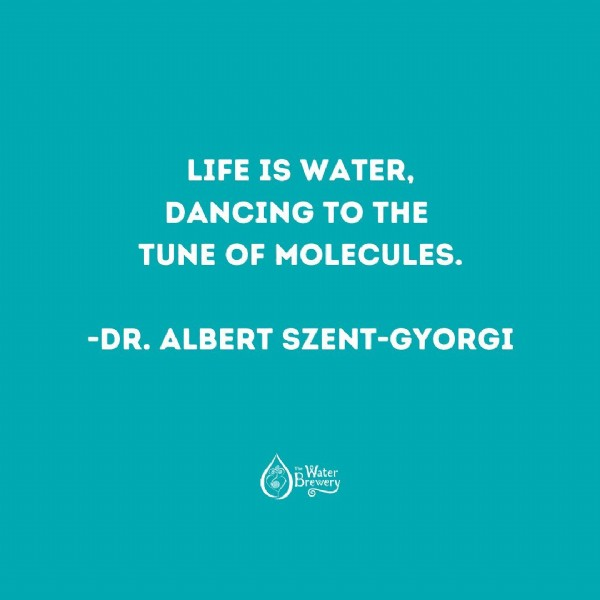 Photo by The Water Brewery in Water Brewery. May be an image of text that says 'LIFE IS WATER, DANCING TO THE TUNE OF MOLECULES. -DR. ALBERT SZENT-GYORGI Water M ewery 1'.