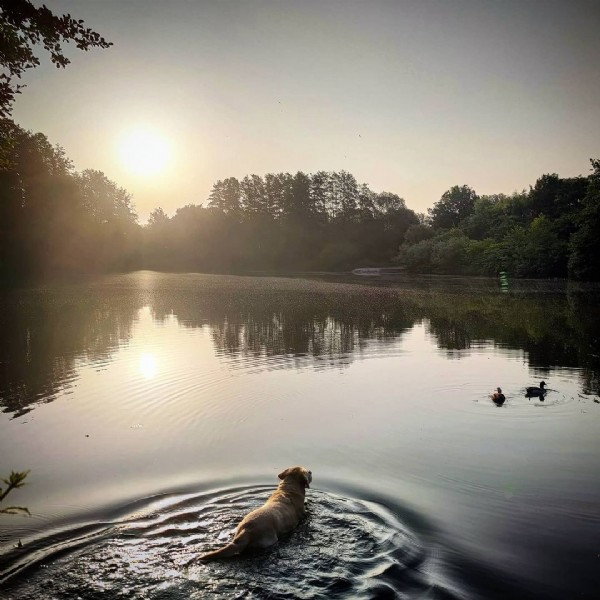 Photo by L E N N  with JuLe on June 18, 2021. May be an image of dog, body of water and nature.