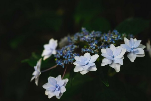 Photo by Shibata in Kyoto Prefecture. May be an image of flower and nature.