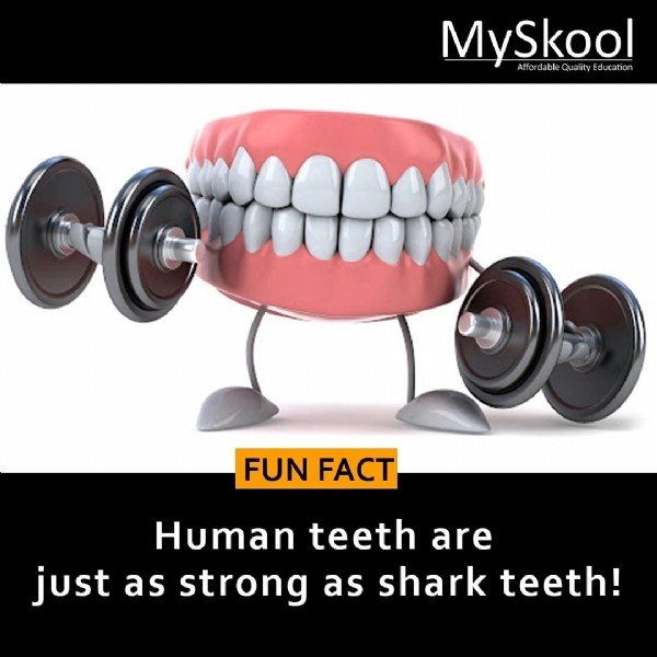 Photo by MySkool on July 28, 2021. May be an image of text that says 'MySkool ducation ation ud FUN FUNFACT FACT Human teeth are just as strong as shark teeth!'.