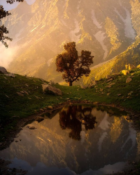 Photo by world & nature in Dharamshala, Himachal. May be an image of nature and tree.