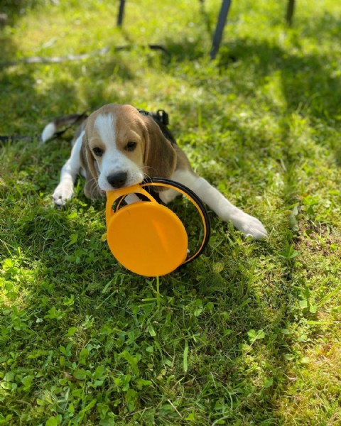 Photo by  Lui on June 23, 2021. May be an image of dog, ball and grass.