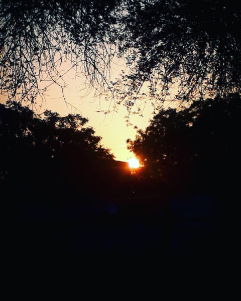 Photo by DYDL in Delhi, India. May be an image of twilight, sky, nature and tree.