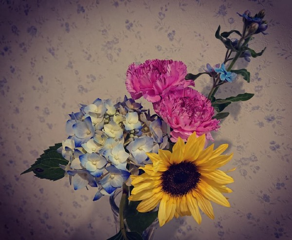 Photo by kaoru on June 19, 2021. May be an image of flower.